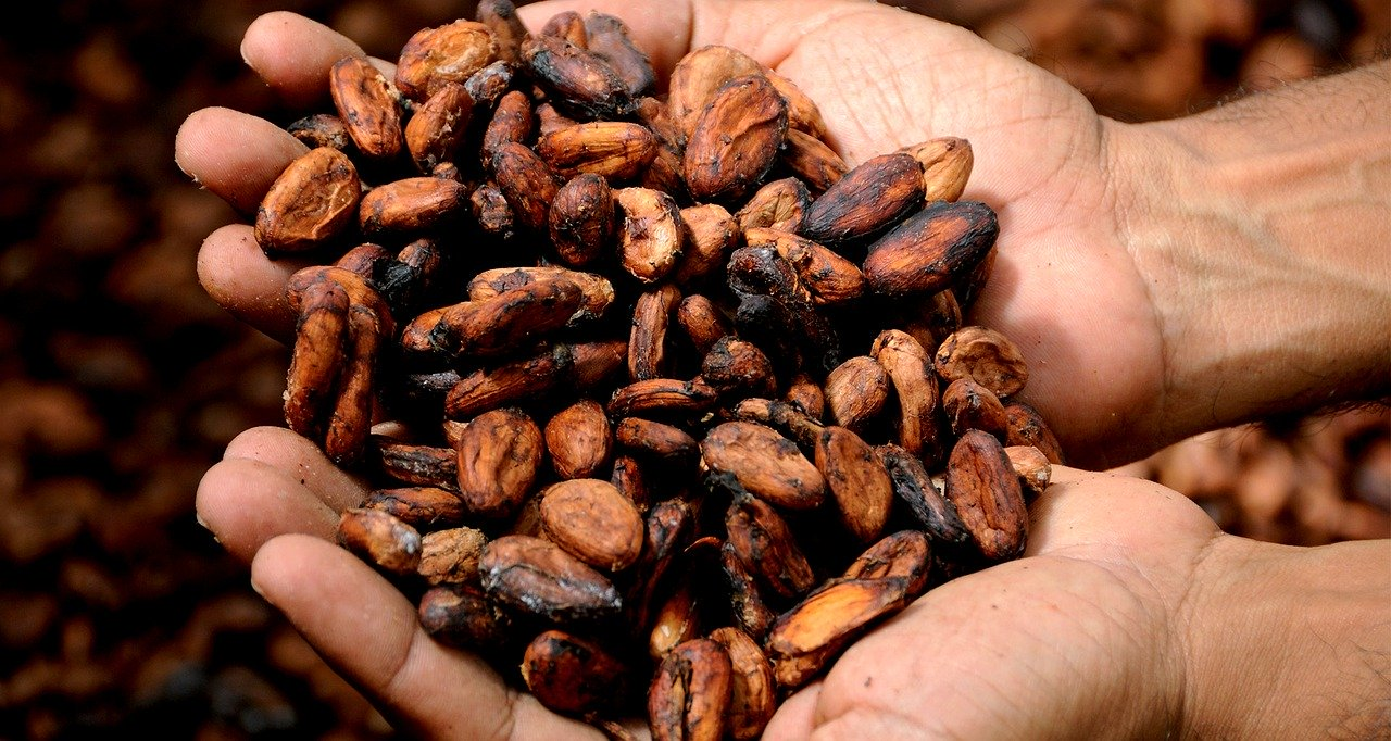Five benefits of cacao paste